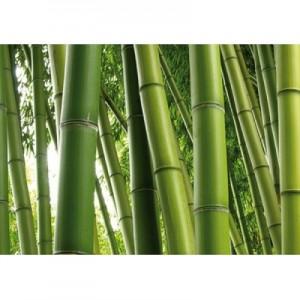 bambu-1