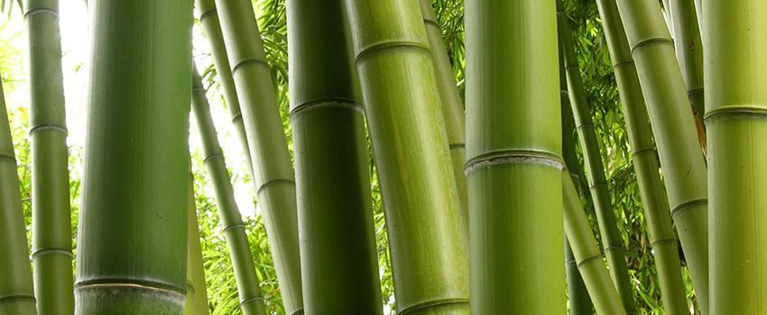bambu parke